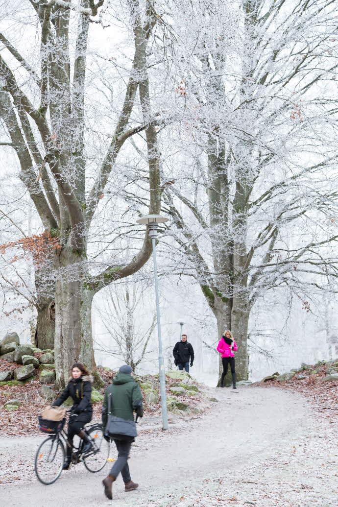 Studenter på vintern en dag med mycket rimfrost