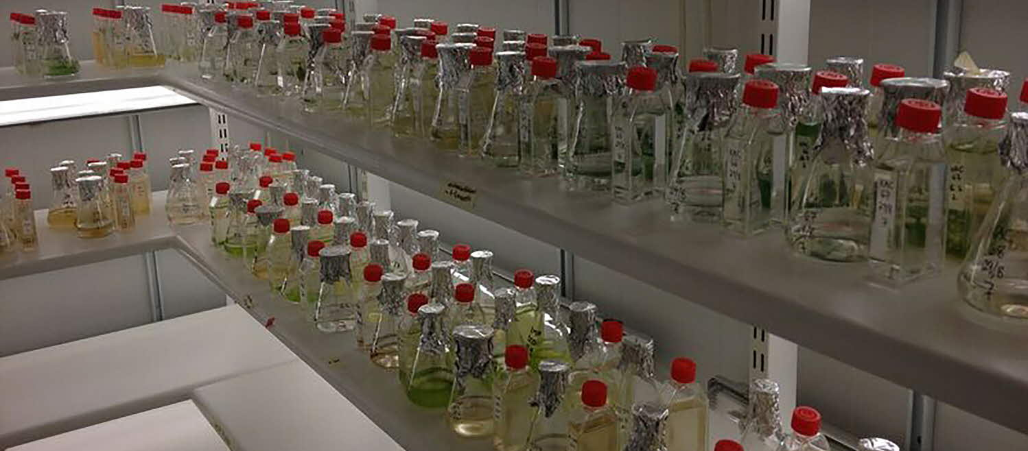 Bottles with phytoplankton