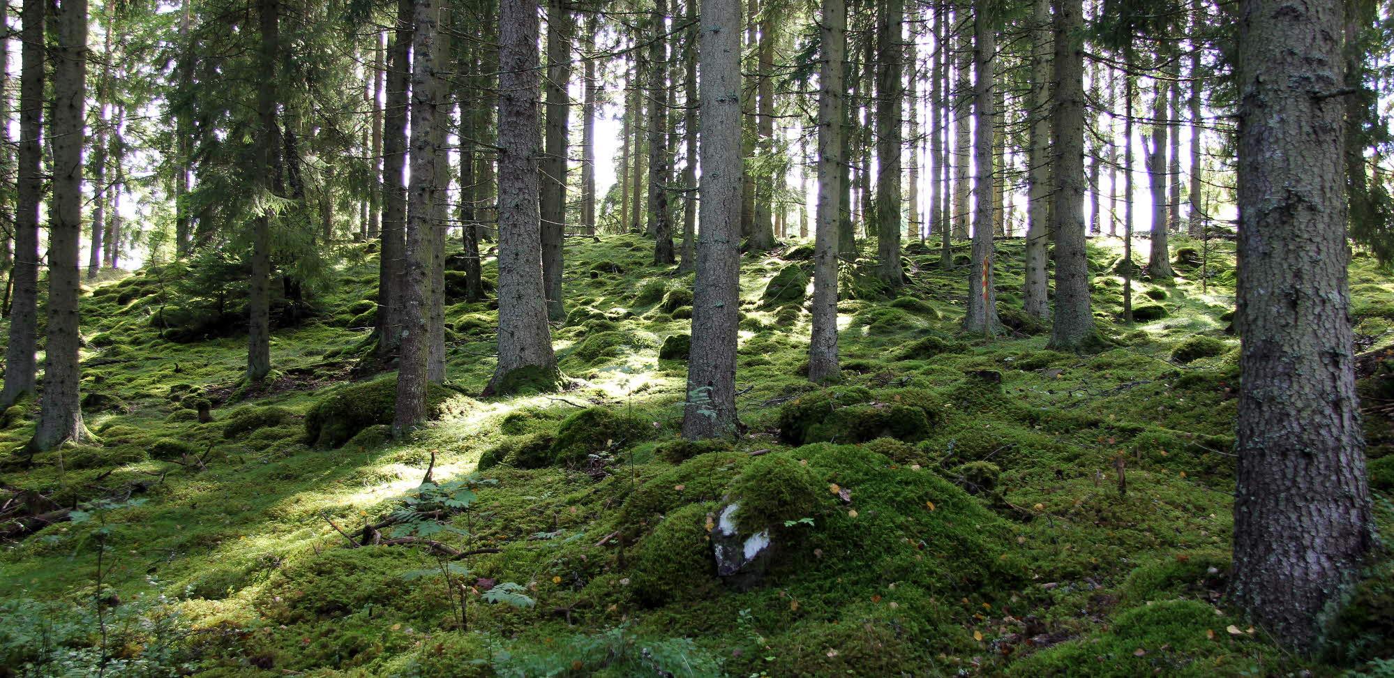 skog och träteknik