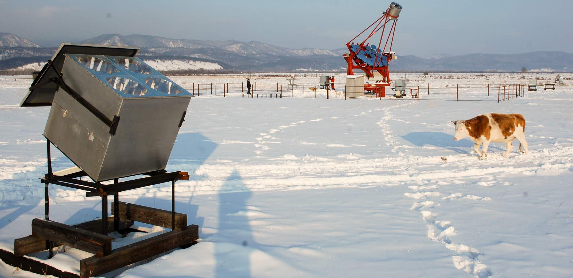 detektor i snö med ko som passerar